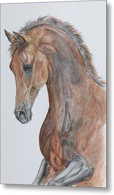 Another  Arabian Horse Metal Print by Janina  Suuronen
