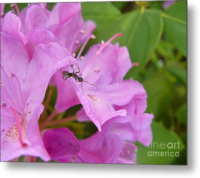 Ant On Flower Metal Print