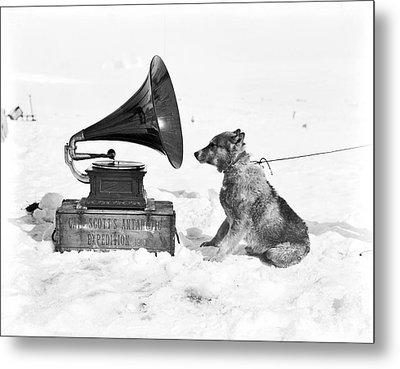 Antarctic Sled Dog And Gramophone Metal Print