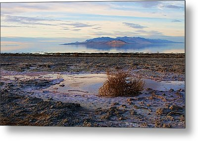 Metal Print featuring the photograph Antelope Island - Tumble Weed by Ely Arsha
