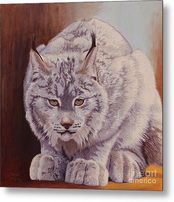 Anticipation Before The Pounce Metal Print