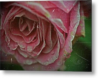 Antique Rose In Fog Metal Print