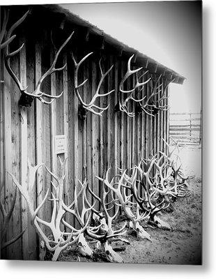 Antlers Metal Print by Dan Sproul