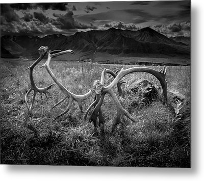 Antlers In Black And White Metal Print