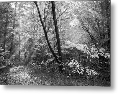 Appalachian Mountain Trail In Black And White Metal Print by Debra and Dave Vanderlaan