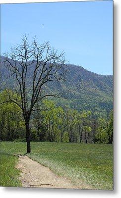 Appalachian Pathway Metal Print