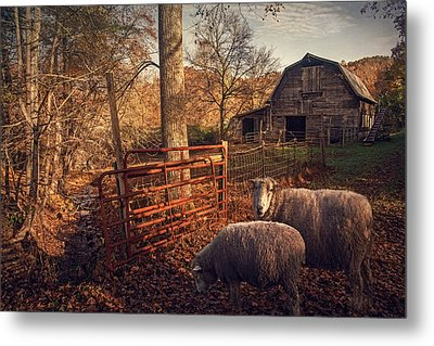 Appalachian Sheep Metal Print by William Schmid