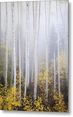 Apparitions I Metal Print by Morris  McClung