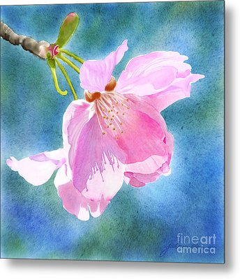 Apple Blossom On Blue Metal Print