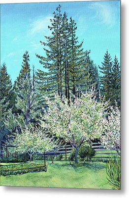Metal Print featuring the painting Apple Blossoms And Redwoods by Asha Carolyn Young