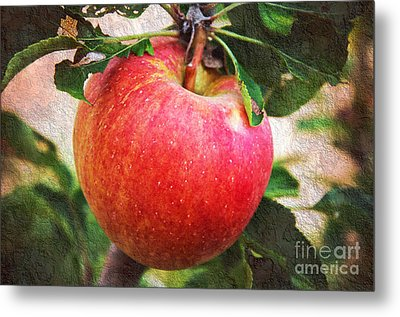 Apple On The Tree Metal Print by Andee Design
