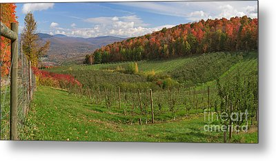 Apple Orchard Panorama Metal Print by Charles Kozierok