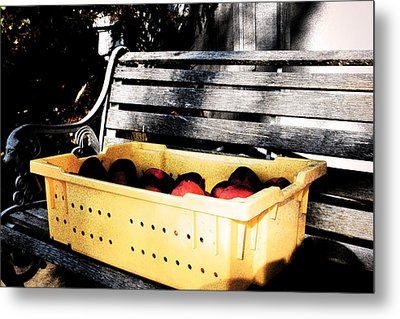 Metal Print featuring the photograph Apple Picking by Meaghan Troup