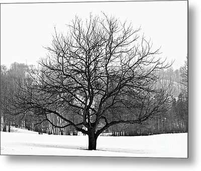 Apple Tree In Winter Metal Print by Elena Elisseeva