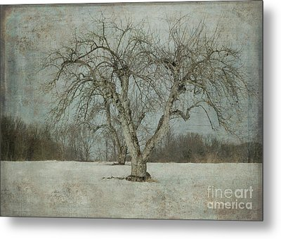 Metal Print featuring the photograph Apple Tree In Winter by Vicki DeVico
