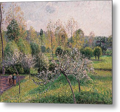 Apple Trees In Blossom Metal Print by Camille Pissarro
