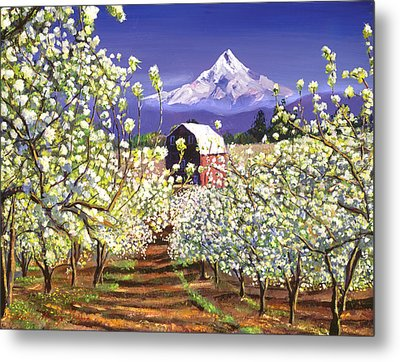 Appleblossoms Mount Hood Metal Print