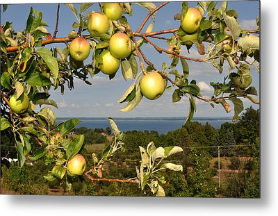 Apples Over Grand Traverse Bay Metal Print