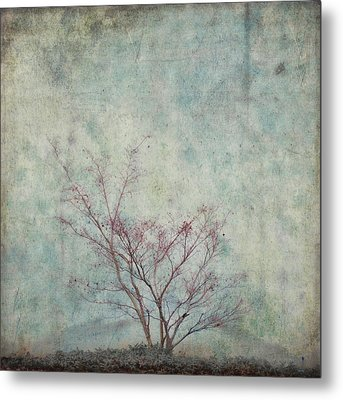 Approaching Spring Metal Print by Carol Leigh