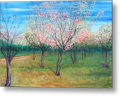 Apricot Orchard Metal Print