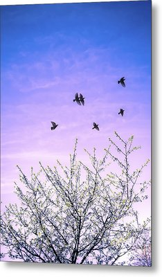 April Dawn Metal Print