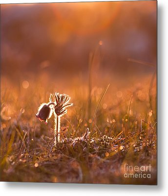 Metal Print featuring the photograph April Morning by Kennerth and Birgitta Kullman