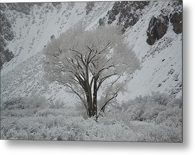 April Snow In Utah - Tree Metal Print