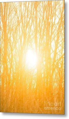 April Sunrise Metal Print by Diane Diederich