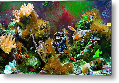 Aquarium Metal Print by Kara  Stewart