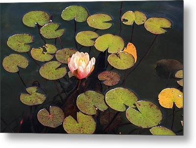 Aquatic Garden With Water Lily Metal Print