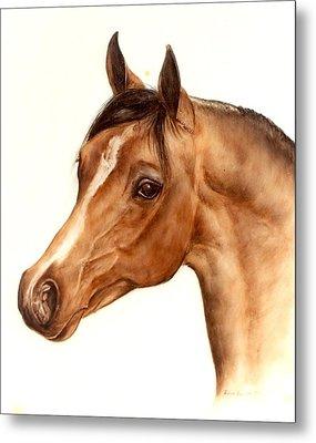 Arabian Horse Head Study Metal Print by Julia Sweda