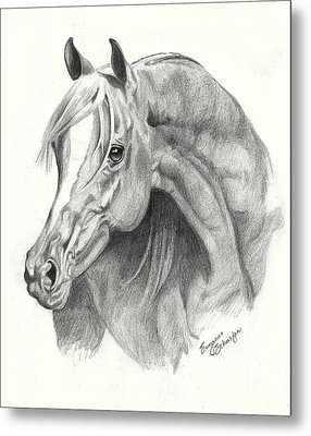 Arabian Stallion Metal Print by Suzanne Schaefer