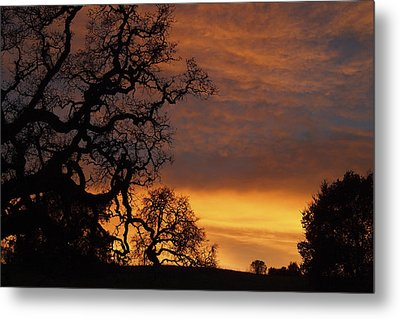 Metal Print featuring the photograph Arastradero Open Space Preserve Sunset by Priya Ghose