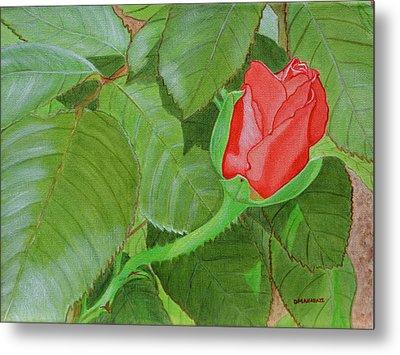 Arboretum Rose Metal Print