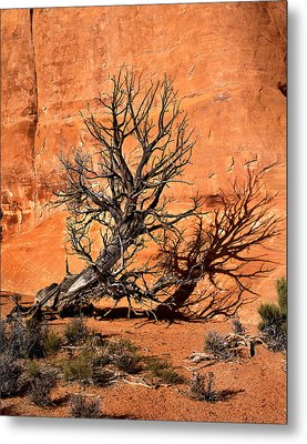 Arches Tree Metal Print