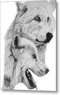 Arctic Wolves Drawing Metal Print by Catherine Roberts