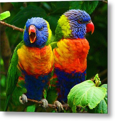 Are You Listening - Rainbow Lorikeets Metal Print