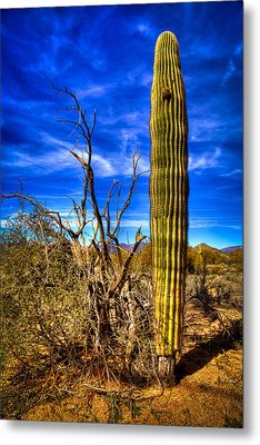 Arizona Landscape IIi Metal Print by David Patterson