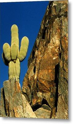 Arizona Sagauro Cactus Metal Print