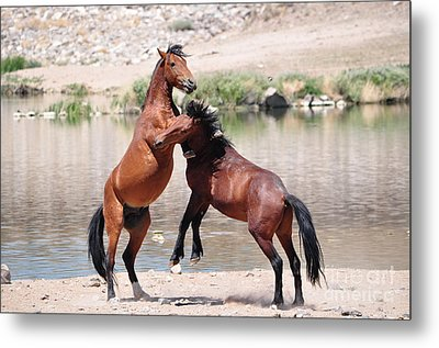 Hoof Hold Metal Print by Lula Adams