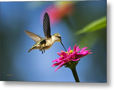 Art Of Hummingbird Flight Metal Print