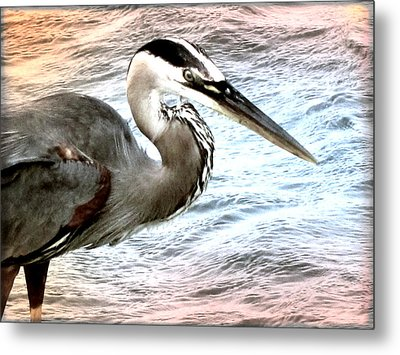 Artistic Great Blue Heron Metal Print