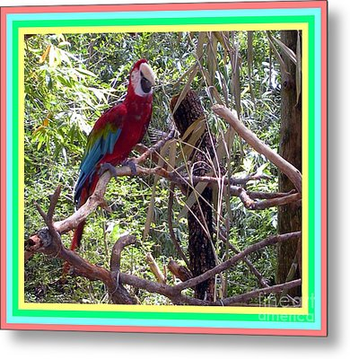 Metal Print featuring the photograph Artistic Wild Hawaiian Parrot by Joseph Baril