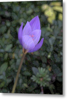 Purple Flower Metal Print by John Freidenberg