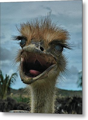 Aruba Ostrich Farm Metal Print by Steven Richman