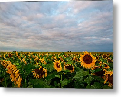 Metal Print featuring the photograph As Far As The Eye Can See by Ronda Kimbrow