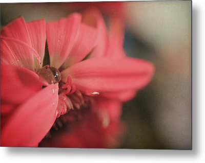 As I Sit By The Window Metal Print by Laurie Search