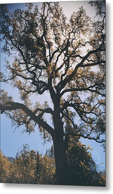 As We Grow And Change Metal Print by Laurie Search