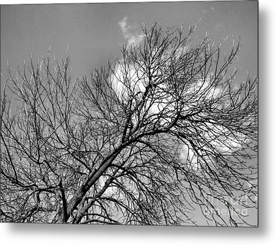 Metal Print featuring the photograph Ash And Light by Robyn King