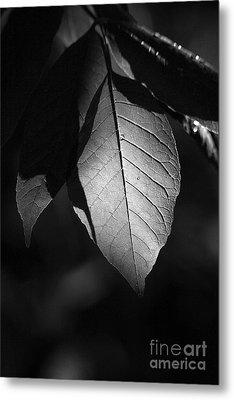 Ash Leaf Metal Print